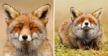攝影師拍下「瞇瞇眼狐狸」的系列照片 超Chill「呆萌表情」每張都想設桌布❤