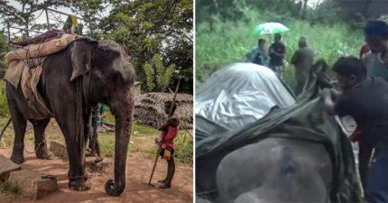 虐待動物只罰40塊!斯里蘭卡成「大象地獄」戴腳鐐載客...累倒才能休息