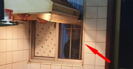 他驚見「窗外有人偷窺」嚇壞 下秒揭開「超扯真相」萬人傻眼:來鬧的?