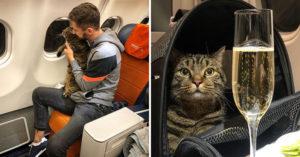 他「帶愛貓搭飛機」卻意外被懲罰 航空公司怒刪名單…曝光「體重規定」網驚:長知識了