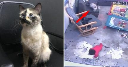 貓咪「呼寶寶巴掌」片段被瘋傳 主人揭開「背後真相」震驚全網:謝謝貓皇!