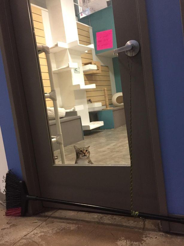 貓老大每天都「幫同伴越獄」!霸氣「率眾貓偷溜」還幫狗把風 厲害到連員工都受不了❤