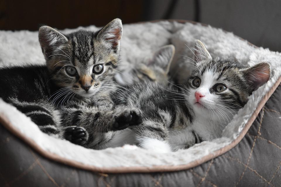 12個「台灣應該馬上跟進」的各國超棒動保法 紐西蘭貓沒戴「3個鈴鐺」不能出門