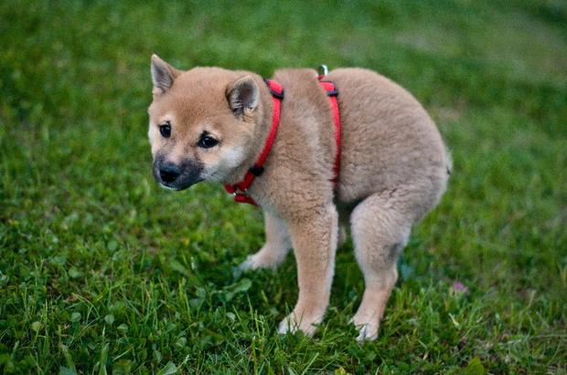 狗狗解放時為什麼盯著主人看?專家揭開「超可愛原因」讓網驚:原來不是害羞...