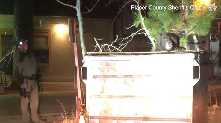 影/貪吃熊「垃圾桶覓食」卻卡到出不來 警察「機智舉動」讓牠瞬間脫困…該減肥了!