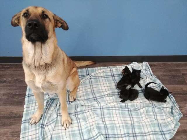 英雄狗在雪夜用肉身「保護5奶貓」 一起被送收容所牠變成「最佳貓保母」