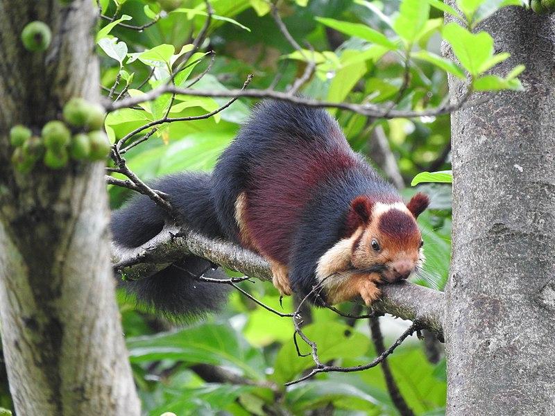 松鼠「彩色毛球」爆紅 網揭露身份發現…體型竟能跟「3歲小孩」一樣高!