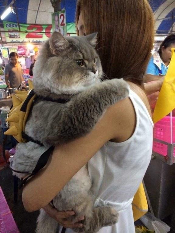 被貓奴寵壞了!20隻「比你肚子還圓」的超萌小胖貓 毛茸茸「大肉球」取暖超好用❤