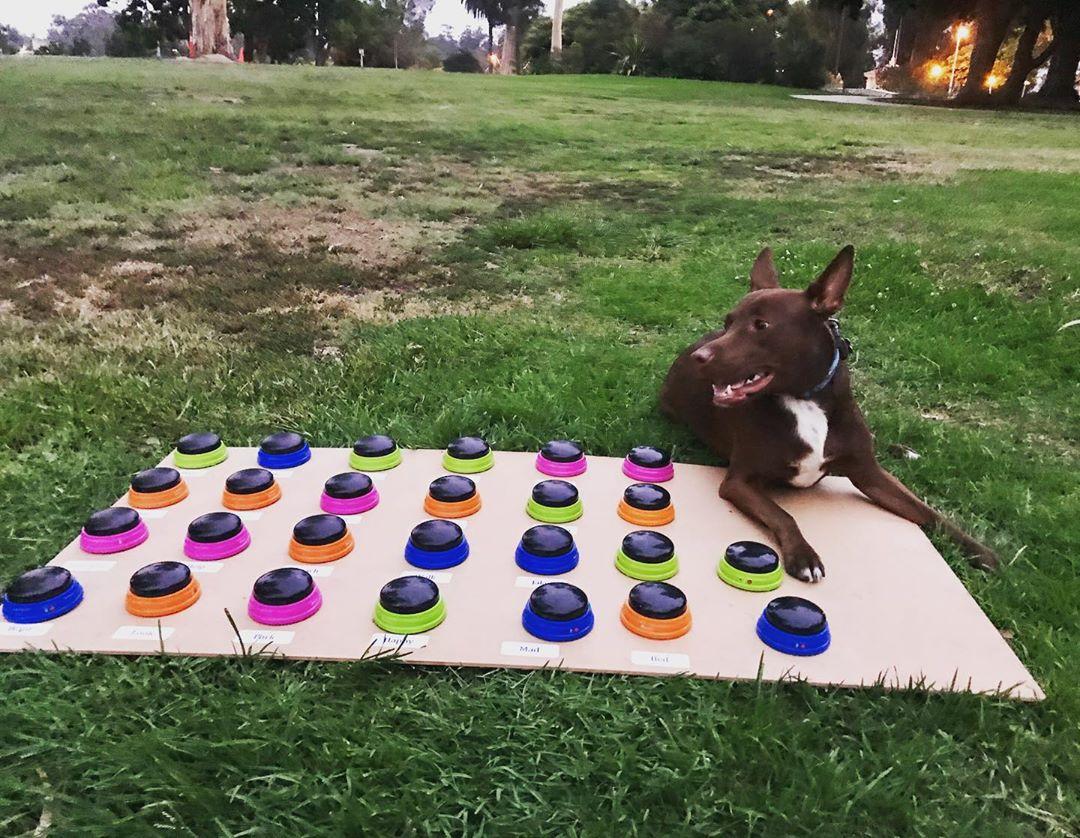 語言學家發明「能跟毛孩對話」的神奇裝置!先錄音再「按鈕溝通」學單詞 秒懂愛犬心思