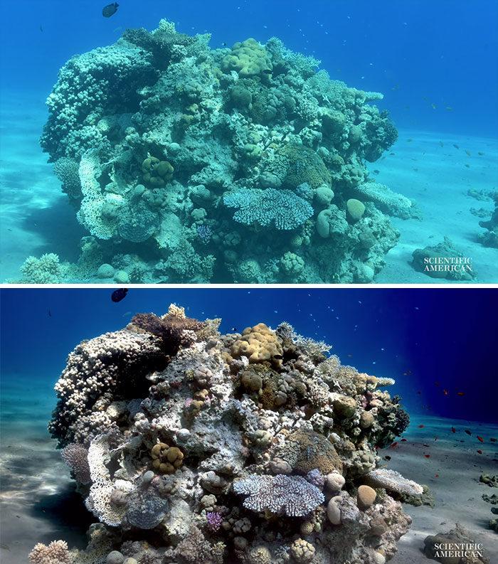 科學家研發「海底拍攝高還原照片」技術 曝光「前後對比圖」反差超驚人!