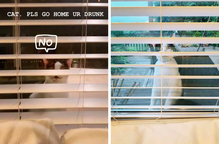 間諜貓守窗外「監控4天不肯走」 每天都「多入侵一點」太可愛