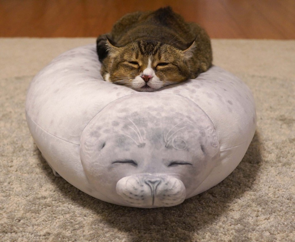 主人買「海豹抱枕」小貓躺上神還原表情網全融化 比原版還搶戲