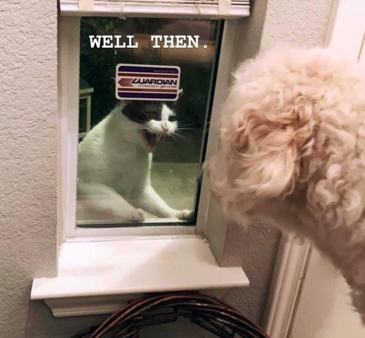 她窗外有間諜貓偷窺「監控4天不肯走」 特務貓入侵「人類基地的任務」太可愛!