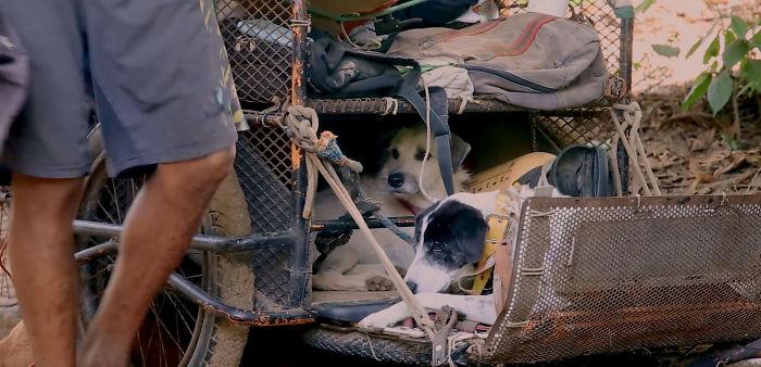 走1萬4千公里救狗!善良哥「睡路邊」只願陪毛孩走最後一程 持續6年還要繼續救