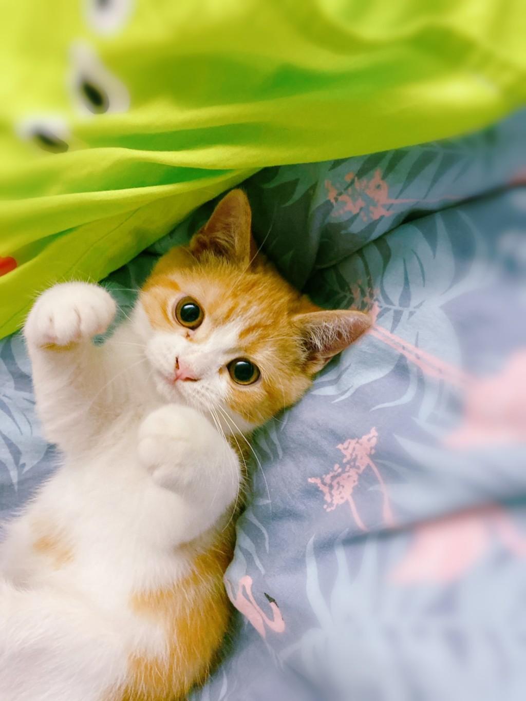 貓奴必玩!超Q手遊體驗「情侶養貓日常」情節超寫實 剪指甲是最大難關