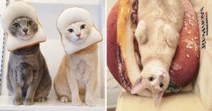 日本貓奴做出超Q「食物貓咪」三花混進水果塔...想吸❤