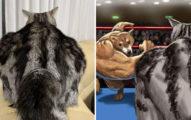 他拍到貓皇「超結實背影」竟然比巨石強森還壯 跟筋肉柴的對決太爆笑!