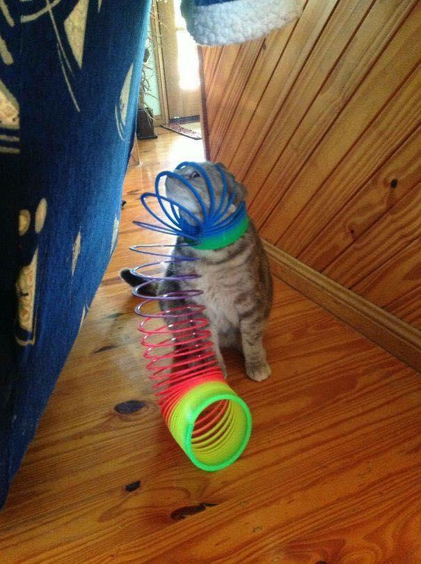 19張讓你「只想笑牠自作自受」的受困貓 沙發就是貓咪地獄!