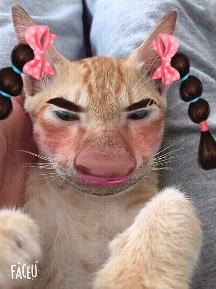 8張「被特效濾鏡玩壞的」貓皇照片 超萌小橘喵→變如花…網友笑翻:主子崩壞了!