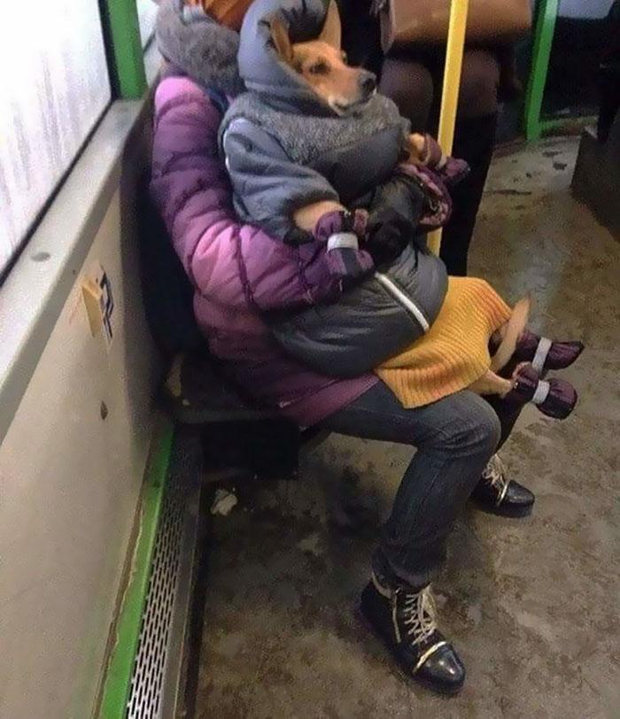 20個網友們「在大眾運輸上看到的」超荒謬畫面 老奶奶「遛雞腿」散步!