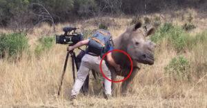 影/野生犀牛主動靠近攝影師 下秒竟「撒嬌討摸摸」網驚呆:太幸運了吧!