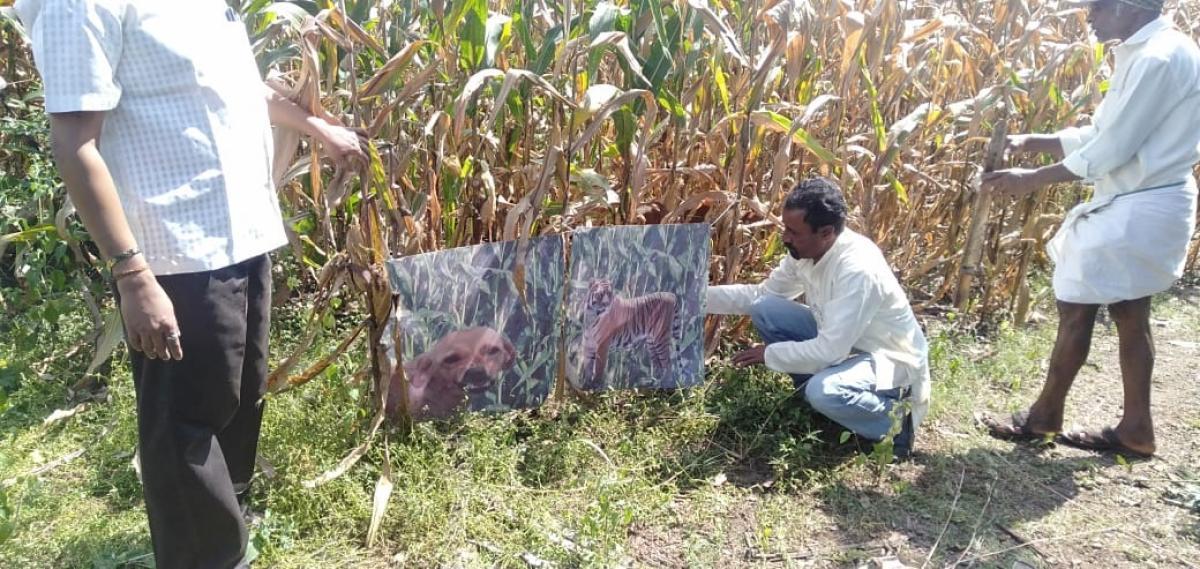 農夫為了「趕走猴子」使出絕招!把愛犬「畫上老虎條紋」超威效果曝光:嚇到了