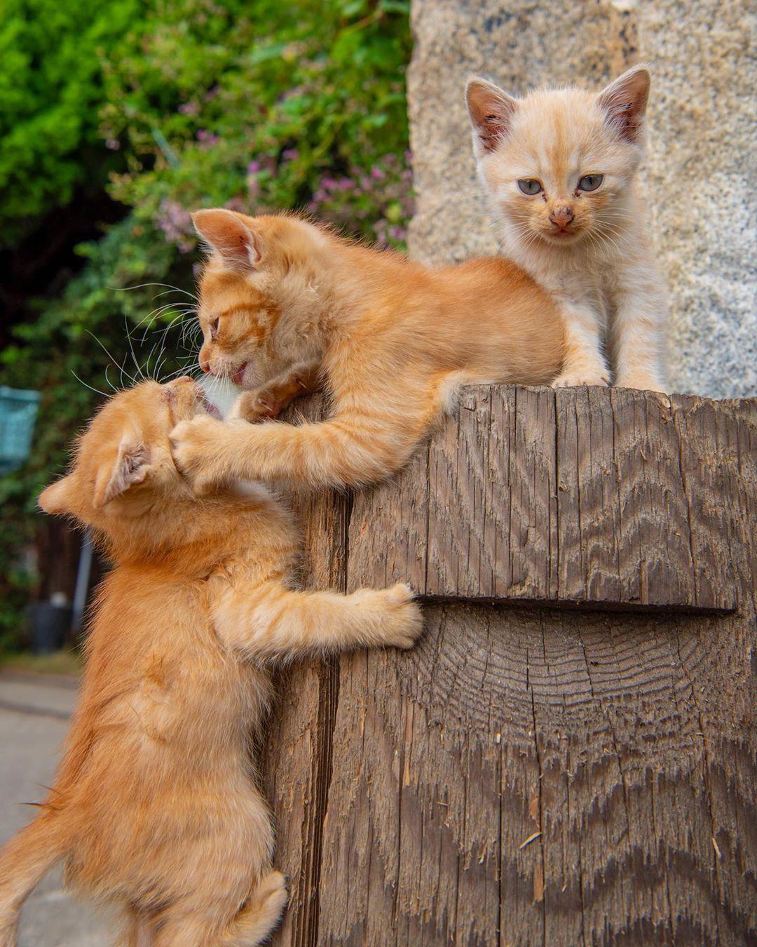 萌貓「近距離特寫」網爆紅 腿開開「露出小蜜桃」貓奴全融化!