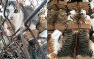 中國「貓毛市場」引國際關注 現場開賣「貓咪背心」惹怒全網…竟然還合法!