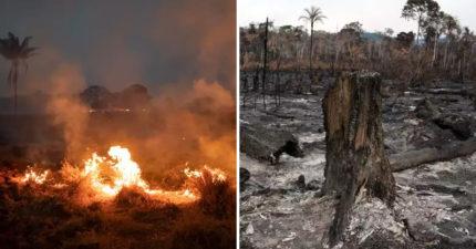 亞馬遜雨林「10年損失」曝光 人類破壞了「840萬個足球場」!