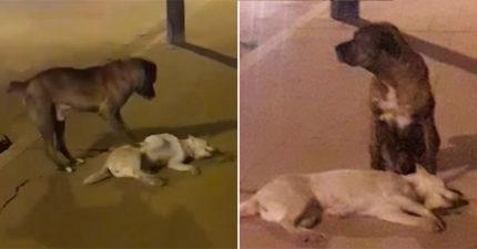 影/狗狗捨不得「好朋友被撞」無助求援 牠不斷用腳「輕推同伴」:快醒醒啊…