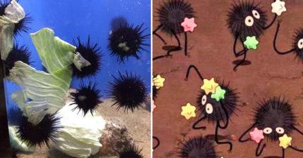 海膽吃高麗菜「重現《神隱少女》小煤炭」經典畫面 超可愛搶食網全融化!