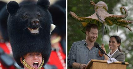 28張「如果生活都被動物佔據」的爆笑P圖照 紅髮艾德「變馬鈴薯」超爆笑!