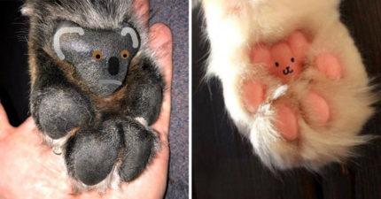 網友意外發現寵物肉球「長超像小熊」 超可愛P圖意外引發一股肉球風潮!