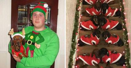 17隻臘腸犬「穿聖誕裝拍全家福」爆紅 毛孩「排排坐沙發」畫面超融化❤