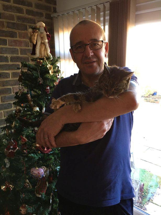 老貓咪給奴才的「超感人大驚喜」 失蹤7年在聖誕節找到!