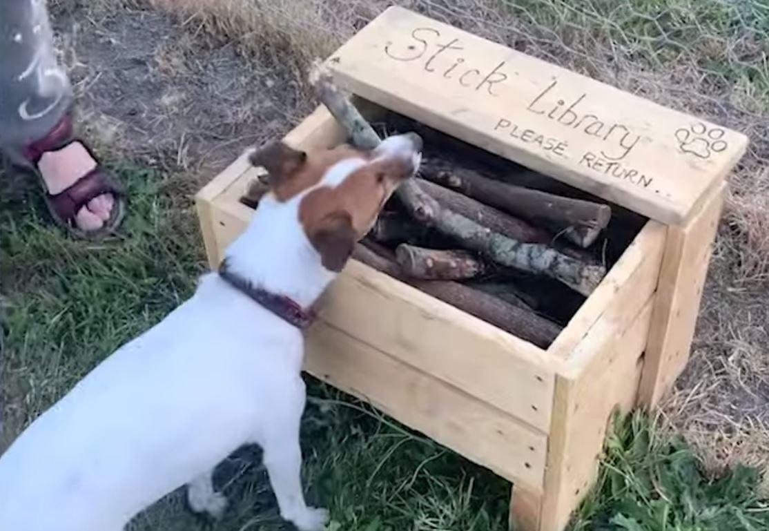主人為愛犬打造「木棒圖書館」意外爆紅 專挑「完美比例樹枝」給狗玩!