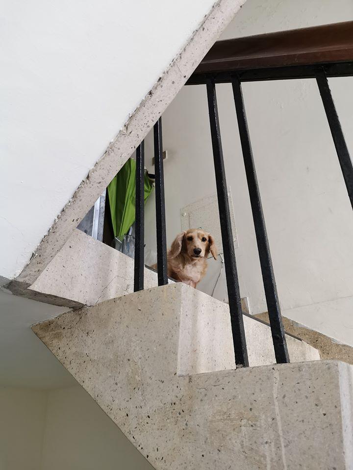 外送驚見熟悉身影!對眼發現是「失蹤5年的愛犬」他淚崩:主人願意還我