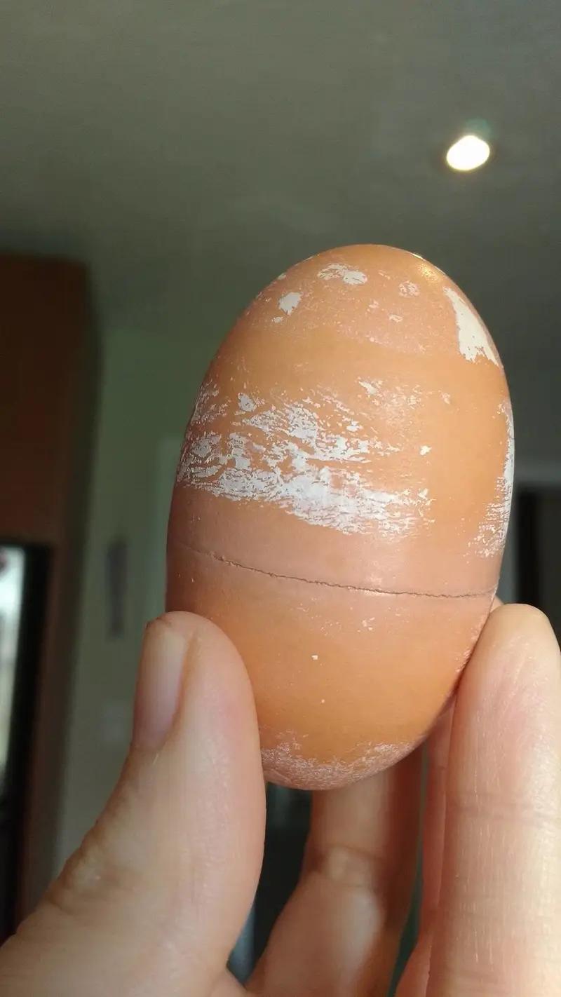 18顆「這輩子你絕對沒看過」的獵奇蛋 企鵝蛋居然是透明的!
