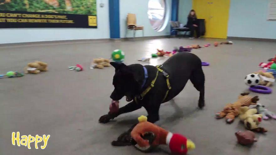 收容所準備聖誕奇蹟「玩具擺滿房間」 毛孩一愣「選擇困難」反應超可愛!