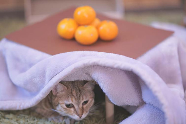 快幫主子買一個!日本推「貓咪暖被桌」還送橘子 超可愛過冬小物引瘋搶