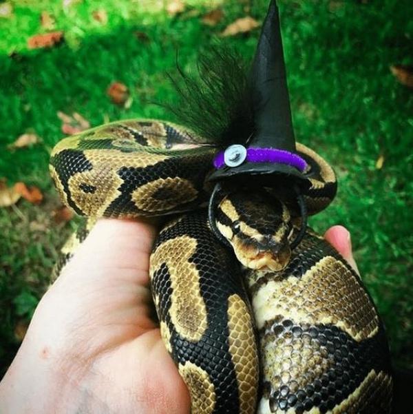 15個主人「幫蛇蛇戴帽帽」的獵奇畫面 冷血版「美少女戰士」水手服超萌!