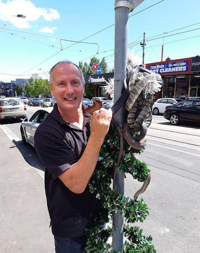 街頭出現「蟒蛇聖誕樹」民眾嚇壞 他揭露「超毒品種」主人淡定回:不要怕!