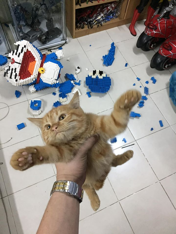 主人拼出超巨「哆啦A夢樂高」驕傲拍照 下秒「貓手一揮」直接粉身碎骨!