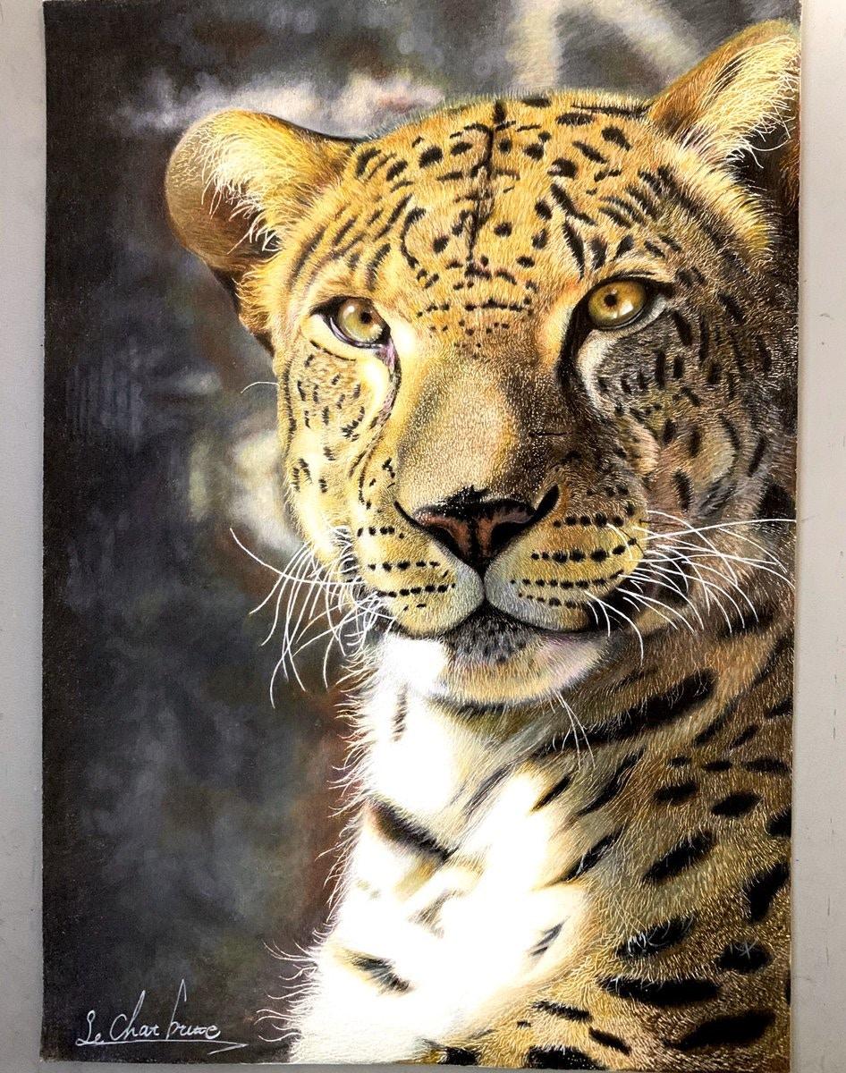 17歲神人「用120色木鉛筆」打造動物畫作 還原度超高「眼睛」也充滿靈性!