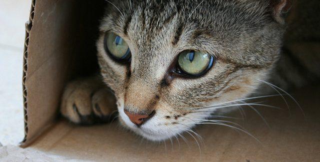 為什麽貓咪「超愛鑽紙箱」?研究揭露「隱藏原因」提醒主人要注意!