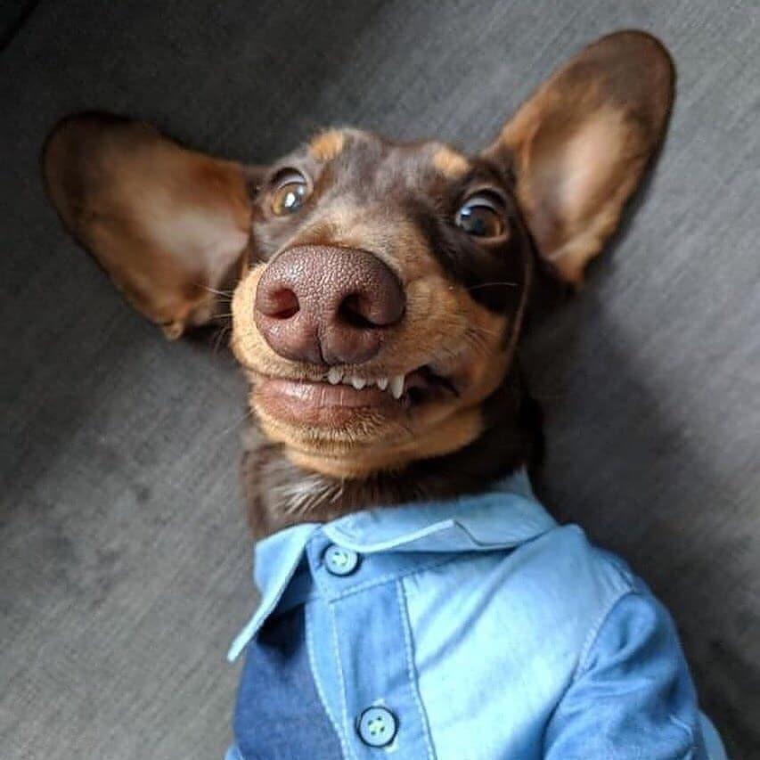 可以當「寵物自拍教科書」的超萌狗狗照 眼神「微迷濛」先+30分!
