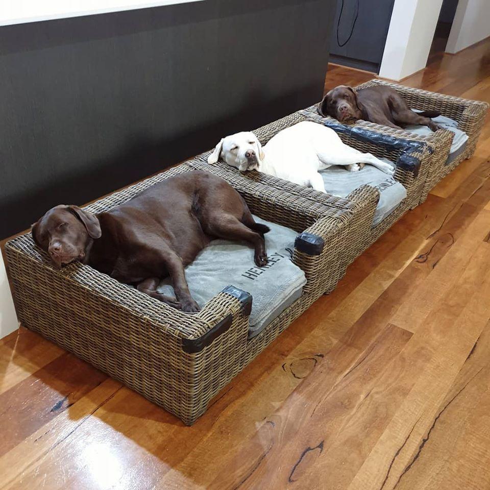 3隻拉布拉多感情超好「堅持一起睡覺」 蓋被取暖「還要抱抱」最療癒!
