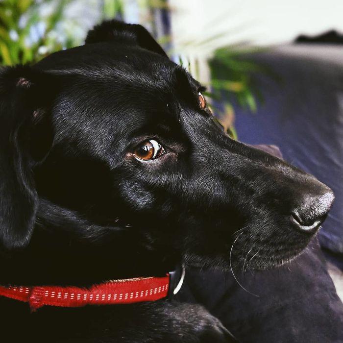4高材生想跟「鄰居的狗」當朋友 寫信拜託...最後收到當事狗「可愛掌印回信」
