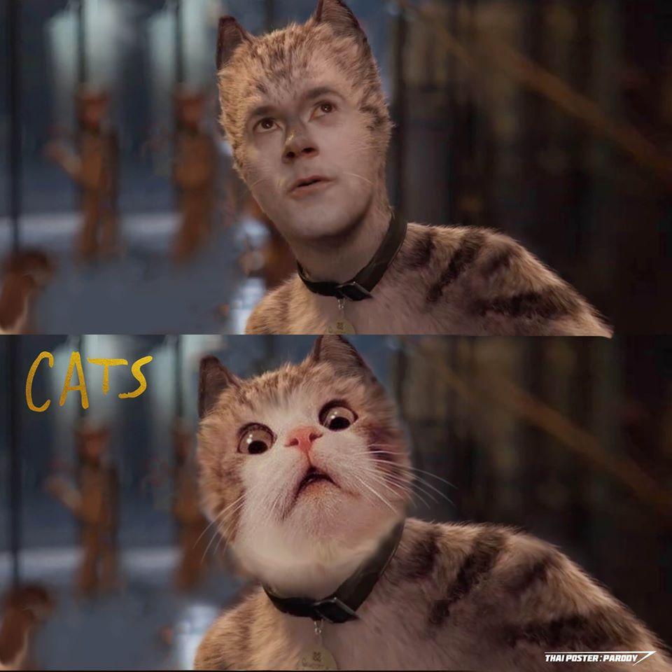 真人版《貓》太恐怖…神人把「真人版→真貓版」網友超買單:壓力瞬間沒了!