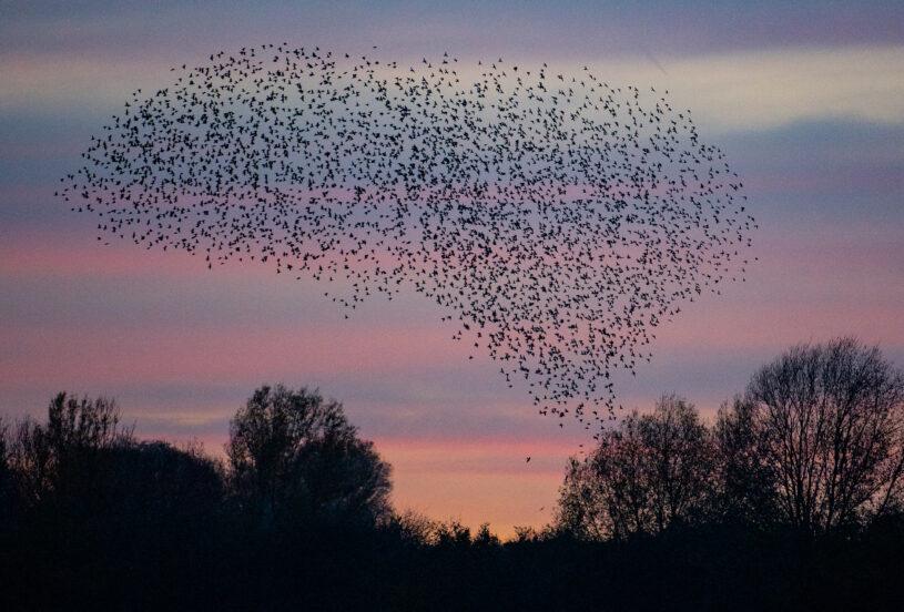小島「佈滿300隻小鳥」遺體 夫婦看到「超詭異景象」嚇壞:前一秒還在覓食…